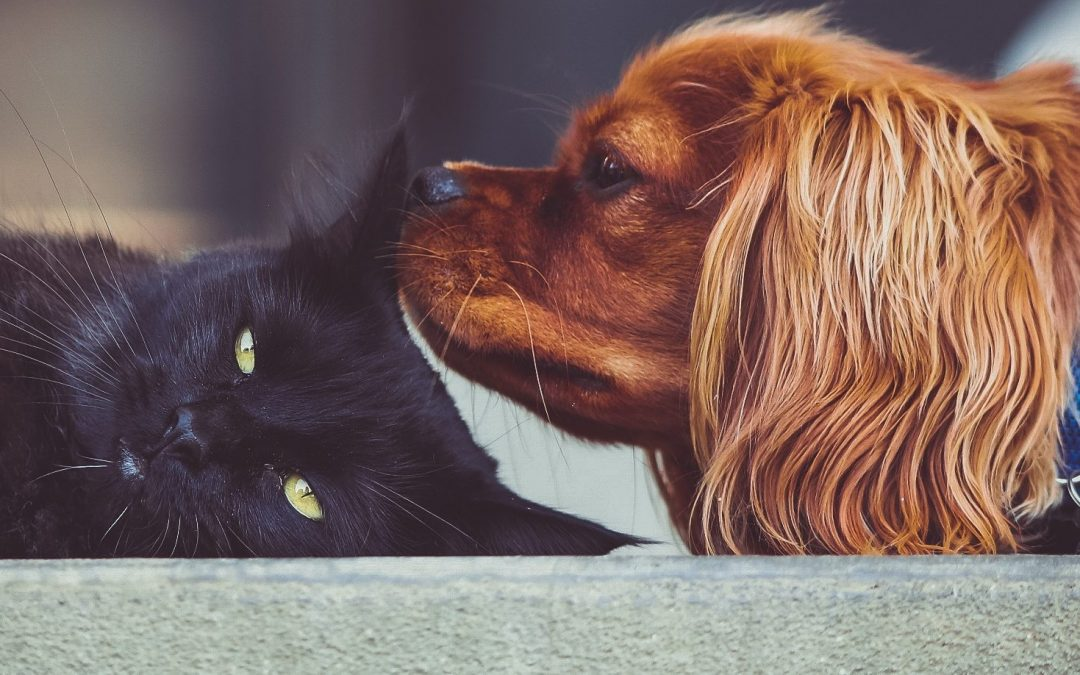 Getting The Most Out Of Your iPhone For Pet Owners